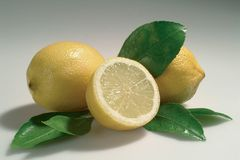 Lemon. S royalty free stock image