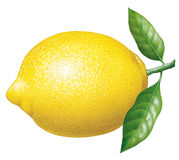 Lemon. Detailed illustration of a lemon Royalty Free Stock Image