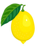 The lemon. The lemon and leaf. Isolated on white. Vector illustration Royalty Free Stock Images