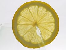 Lemon. Olympus e 500 Olga Barbacadze Royalty Free Stock Image