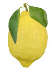 Lemon. Fresh lemon with branch and leaves closeup Royalty Free Stock Image