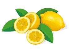 Lemon royalty free illustration