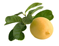Lemon. With leaves isolated on background Stock Images