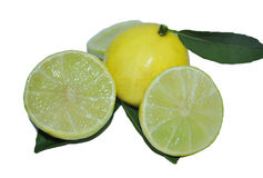 THE LEMON Stock Images