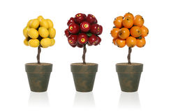 Lemon, Apple, Orange Tree Royalty Free Stock Photos