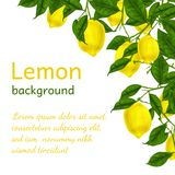 Lemon background poster Stock Images
