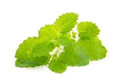 Lemon balm Royalty Free Stock Images
