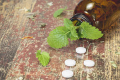 Lemon Balm. Bottle with tablets and herbal on wooden table Stock Photography