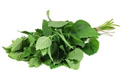 Lemon balm. Bunch of lemon balm isolated on white background stock photography