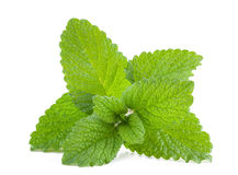 Lemon balm Royalty Free Stock Photography