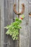 Lemon-balm healthy herbs and rusty horseshoe Stock Image