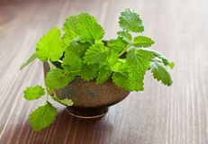 Lemon balm herb. Fresh lemon balm herb .(Melissa officinalis stock images