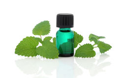 Lemon Balm Herb Essence. Lemon balm herb leaf sprigs and an aromatherapy essential oil glass bottle isolated over white background. Melissa officinalis royalty free stock photos