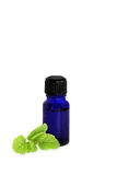 Lemon Balm Herb Oil Stock Images