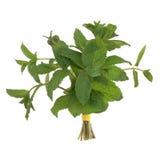 Lemon Balm Herb Posy. Lemon balm herb leaf posy isolated over white background Royalty Free Stock Images