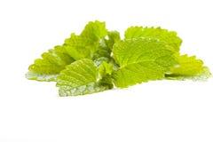 Lemon balm leaf on white background, isolated Stock Photography