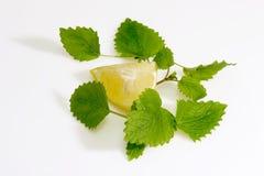 Lemon Balm Leaves with Lemon. Slice on light background royalty free stock images