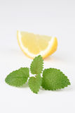 Lemon balm and lemon Royalty Free Stock Image