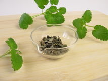 Lemon balm, Melissa folium Stock Photography