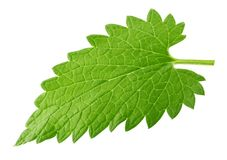 Lemon balm melissa leaf isolated on white Royalty Free Stock Photography