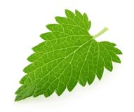 Lemon balm melissa leaf isolated on white.  stock images