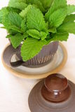 Lemon balm - Melissa officinalis Stock Images