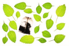 Lemon balm (Melissa officinalis) Royalty Free Stock Photo