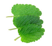 Lemon balm, mint Stock Photography