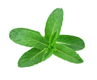 Lemon balm, mint Royalty Free Stock Photography