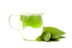 Lemon balm tea Stock Images
