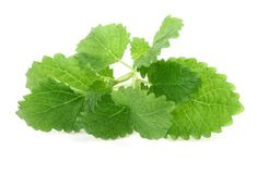 Lemon balm on white Stock Photo