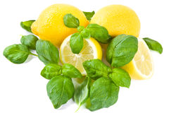 Lemon and basil stock image