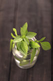 Lemon basil in glass jar closeup Royalty Free Stock Images