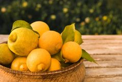 Lemon Bowl Royalty Free Stock Images