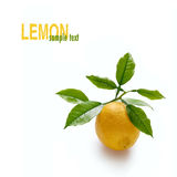 Lemon on branch Stock Image