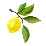 Lemon on a branch with leaves. Watercolor. Vector stock illustration