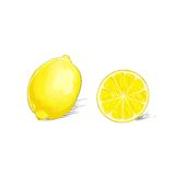 Lemon citrus fruit color sketch draw isolated over Stock Photography
