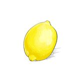 Lemon citrus fruit color sketch draw  over Stock Image