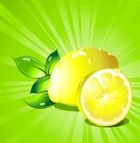 Lemon citrus fruit. Vector. vector illustration