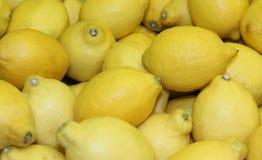 Lemon Citrus Fruits. Stock Image