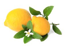 Lemon. (Citrus x limon) - isolated ripe fruit against white background with a little twig and blossom Stock Image