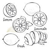 Lemon citrus vector set Stock Photos