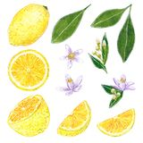 Lemon clipart set. Hand drawn watercolor illustration stock illustration