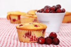 Lemon cranberry muffin Stock Photos