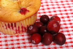Lemon cranberry muffin with berries Stock Photography