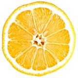 Lemon cross section Royalty Free Stock Photo