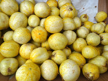 Lemon cucumber, Cucumis sativus 'Lemon' Royalty Free Stock Photos