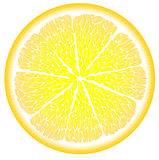 Lemon in the cut close up Royalty Free Stock Image