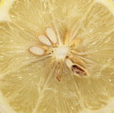Lemon in a cut Stock Images
