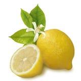 Lemon and cut of lemon. Isolated image of a lemon and cut of lemon on a white background Royalty Free Stock Photos
